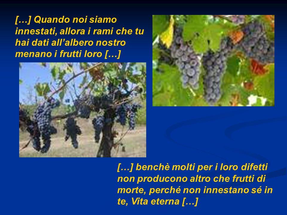 […] Quando noi siamo innestati, allora i rami che tu hai dati all'albero nostro menano i frutti loro […]